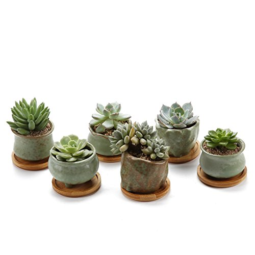 - T4U Succulent Planter Pots Ceramic -Set of 6, Small Ceramic Succulent Pots Cactus Planters, Clay Pots with Drainage Window Boxes with Bamboo Tray, Green