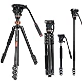Cayer AF2451 Professional Video Camera Tripod 67 inches with Fluid Drag Head, 4-Section Compact Aluminimum DSLR Tripod Convertible to Monopod for DSLR Camera, Video Camcorder
