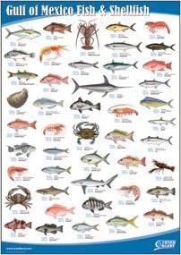 Amazon com gulf of mexico fish and shellfish books