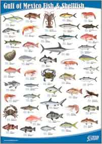 Amazon.com: Gulf of Mexico Fish and Shellfish: Books