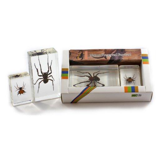 Spider Paperweight - Spider Collection 2 pc Set