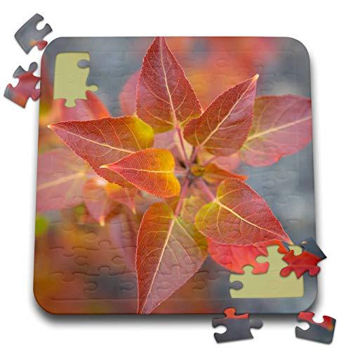 3dRose Danita Delimont - Natural Patterns - Canada, Yukon, Kluane National Park. Balsam Poplar Leaves. - 10x10 Inch Puzzle -