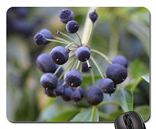 Mouse Pad - Ivy Fruit Blue Violet Berries Toxic Smart Twig