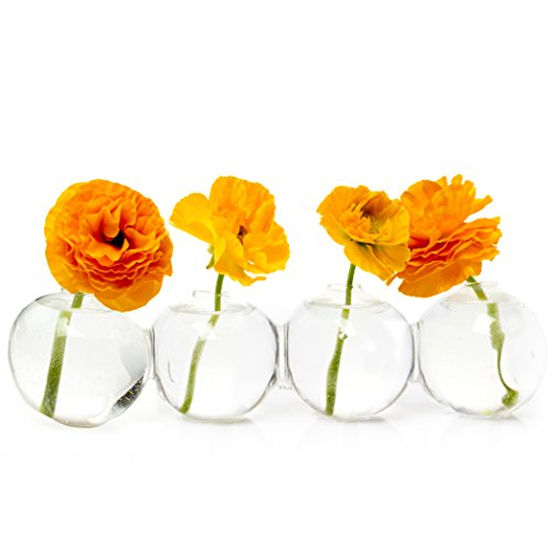 Parrot Stem Tulip (Chive – Big Caterpillar - Large Clear Glass Bud Vase for Short Flowers, Low Sitting Flower Vase, Long Unique Shape Floral Container, Set of 4 Glass Round Connected Balls)