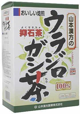茶 ウラジロガシ
