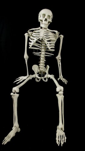Budget Bart 4 Ft Halloween Skeleton 4th -