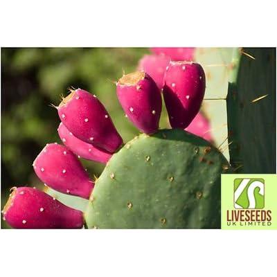 Liveseeds - Rare- Red Prickly Pear-Opuntia Macrorhiza-Opuntia ficus-indica 10 Finest Seeds : Garden & Outdoor