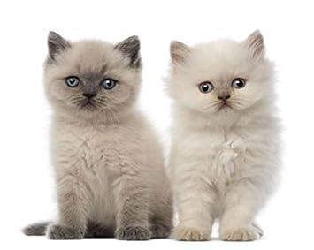Images de bebe chats - Photo de bebe chat ...