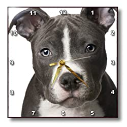 3drose American Pit Bull Terrier Puppy Wall Clock, 10 by 10-Inch
