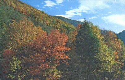 Great Smoky Mountains National Park, Tennessee Postcard from Old Postcards
