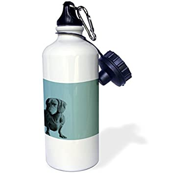 02b6cd0d77 Moson Water Bottle Gift, Adorable Daschund Dog Pets Animals White Stainless  Steel Water Bottle for Women Men 21oz: Amazon.co.uk: Sports & Outdoors