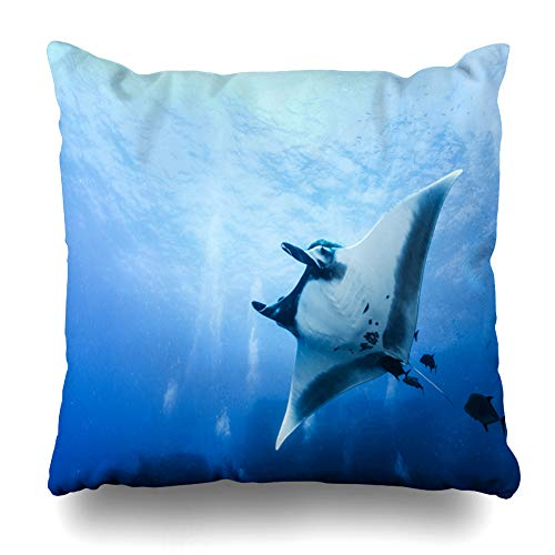 Pakaku Decorativepillows Case Throw Pillows Covers for Couch/Bed 18 x 18 inch, Manta Ray at Islas Revillagigedos Mexico Home Sofa Cushion Cover Pillowcase Gift Bed Car Living Home