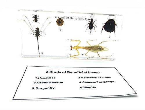 6 종류의 유익한 곤충 종이 과학 과학 교실 과학 교육 시험 견본/6 ..