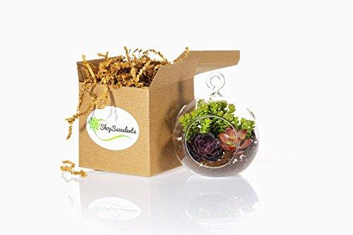 Shop Succulents Mini Succulent Container Design by Shop Succulents