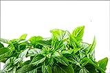 RDR Seeds 150 Lemon Basil Seeds - Lemon Scent Basil, Thai Lemon Basil, Lao Basil, Hoary Basil, Ocimum Basilicum