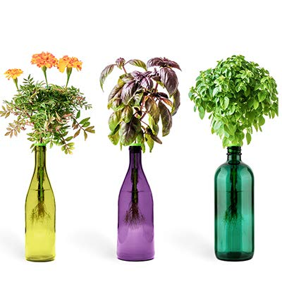 Indoor Herb Garden Starter Kit: Edible Flowers Kitchen Window Sill Garden Kit with Marigold, Purple and Flowering Globe Basil Seeds - Fresh Herbs At Home Planter - Small Plant Growing ()