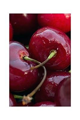 Homegrown Cherry Tree Seeds, 80, Bing