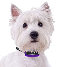 Superior Bark Collar - XS - Med Sized Dogs - Beep - Ultrasonic - Vibration - Shock - Rechargeable - No Pain Anti Bark Collar - 5lb to 60lb - No More Expensive Batteries - East to Set Up and Use PURPLE