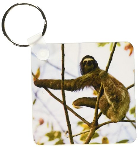 3Drose Three-Toed Sloth Bradypus Variegatus - Key Chains, 2.25 X 4.5 Inches, Set Of 2 (Kc_10379_1) - 3D Rose (Home Improvement)