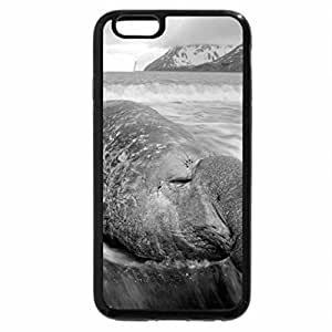 iPhone 6S Plus Case, iPhone 6 Plus Case (Black & White) - elephant seal napping on the beach