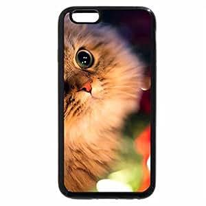 iPhone 6S Plus Case, iPhone 6 Plus Case, Adorable Cat