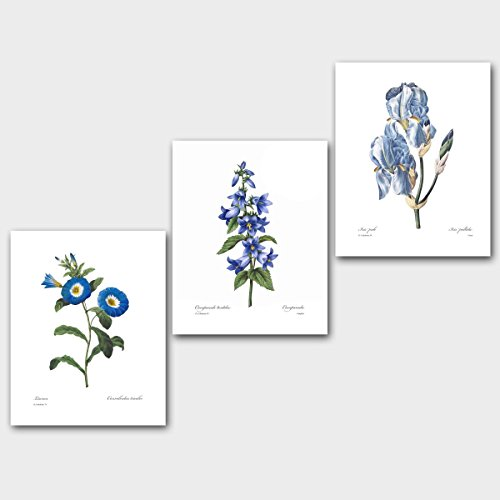 Set of 3 Botanical Prints, Blue Wall Art (Redoute Flower Room Decor, Lotus Iris) Unframed 8x10 inch