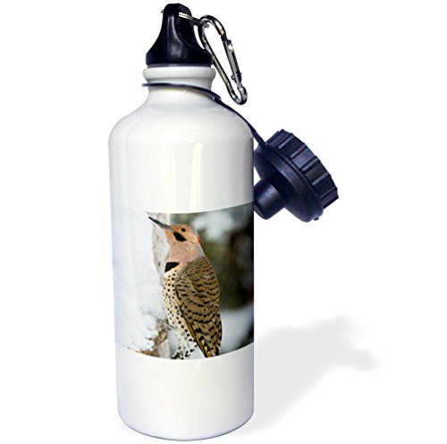 3dRose Use Northern Flicker Male in Winter, Marion, Illinois, USA. -Sports Water Bottle, 21oz (wb_206633_1), Multicolored (Northern Flicker Woodpecker)