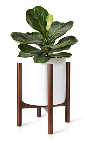 The 10 best fox and fern plant stand 2020