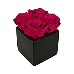Luxe Bloom Home Collection 4 Fresh Cut Preserved Sangria Pink Roses in a3\