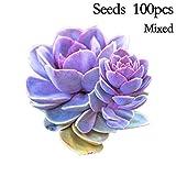 quan di 100 Pieces Mixed Succulents Seeds Rare Indoor Flower Mini Cactus Seeds
