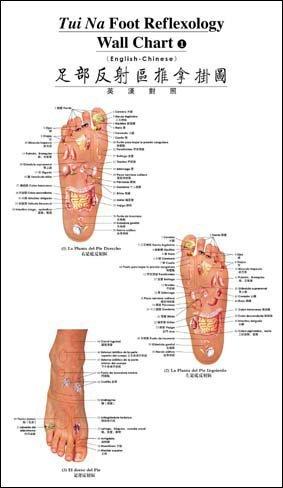 Amazon Tui Na Foot Reflexology Wall Chart English Chinese