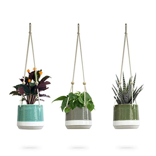 Ceramic Hanging Planter | Colorful Succulent Pots | Round Plant Holder Container | Cactus Pot with Cotton Rope Hanger | Indoor Outdoor Decor | 23 Bees (3 Pack x Pop of Color)