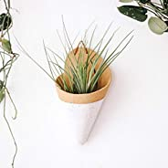 Carter and Rose Ceramic Wall Planter Large with Air Plant - Speckled White - Handmade in The USA