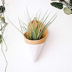 world-of-handmade-ceramic-wall-planter-with-air-plant-carter-and-rose
