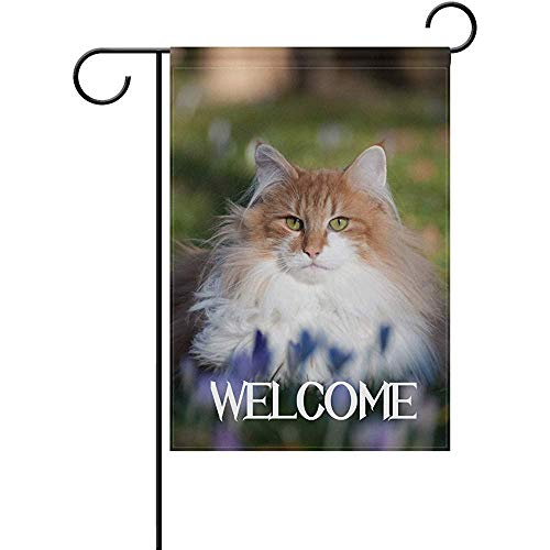 (Dedasf Garden Flag Welcome Funny Norwegian Forest Cat Polyester Banner 12 x 18 Inch Double Side Print Home Outdoor Patio Yard Garden Decor Flag )