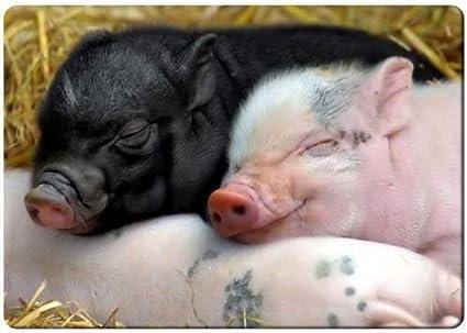 amazon com baby pigs sleeping fridge magnet refrigerator magnets