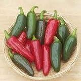 Go Garden 25 Jalapeno M Hot Pepper Seeds 2019 ~ Non-GMO ~ U. S. A. Seller!