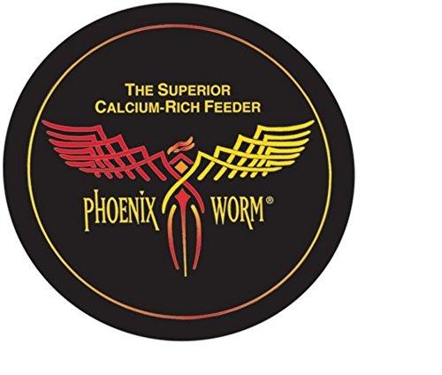 Phoenix Worms - Phoenix Worms 100 Large Original BSF Black Soldier Fly