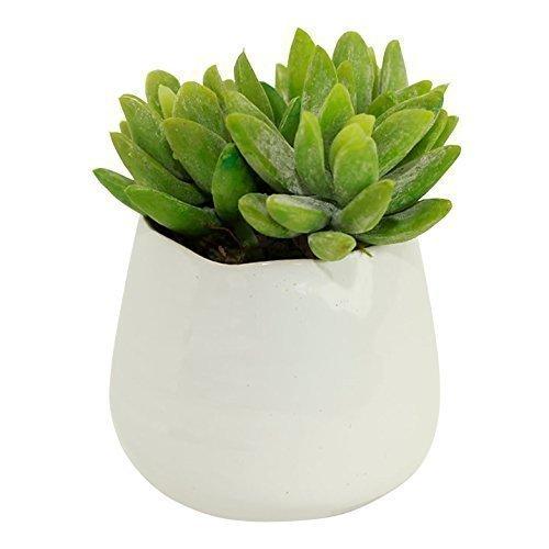 Amazon Small Faux Sedum Succulent In Round White Ceramic