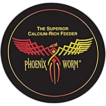 Phoenix Worms 100 Large ORIGINAL BSF Black soldier fly