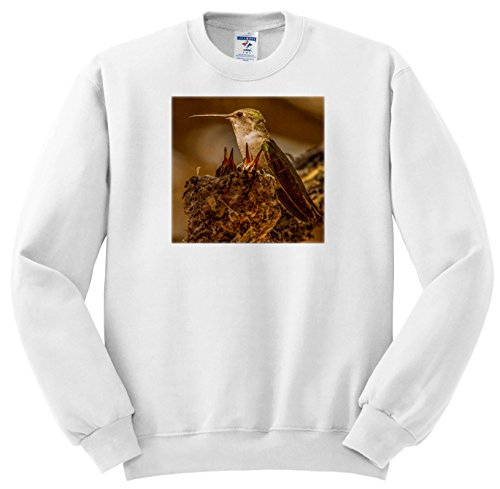 Price comparison product image 3dRose Danita Delimont - Hummingbirds - USA, Arizona, Tucson, Hummingbird Taking Care Of Her nestlings. - Sweatshirts - Youth Sweatshirt XS(2-4) (SS_278472_9)