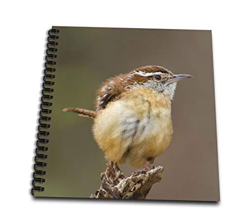 (3dRose db_146624_3 Use, Texas, Texas Hill Country Carolina Wren Bird Us44 Bjy0010 Jaynes Gallery Mini Notepad, 4