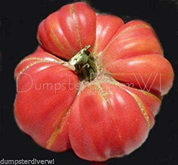VISA STORE Organic Brandy Tomato Best-Flavored 40+ Seeds Large Pink Non-GMO