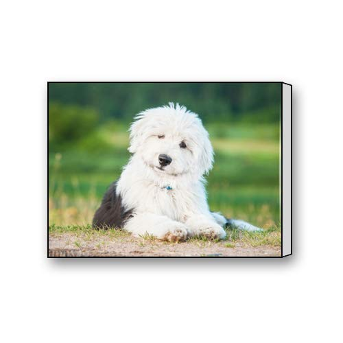 Old English Sheepdog Puppy Art Paintings Canvas Prints for Living Room Bedroom Home Office Decor 12