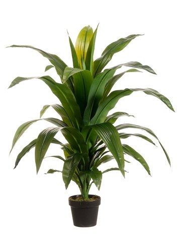 42'' Dracaena Fragans Silk Plant w/Pot (case of 2) by SilksAreForever