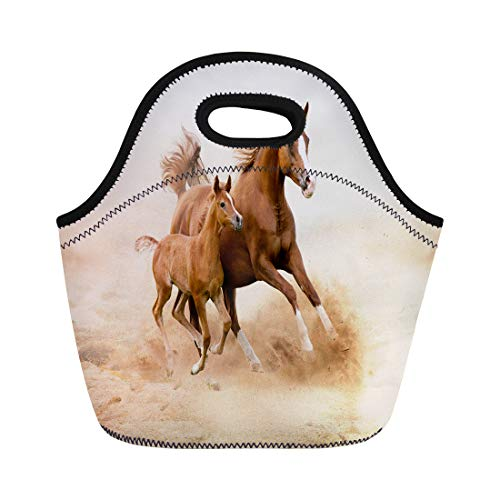 (Semtomn Neoprene Lunch Tote Bag Brown Animal Purebred White Horse in Desert Foal Reusable Cooler Bags Insulated Thermal Picnic Handbag for Travel,School,Outdoors,Work )