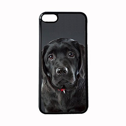 Specificity Case Hard Plastics Women On Touch6 Ipod Print Labrador Retriever ()