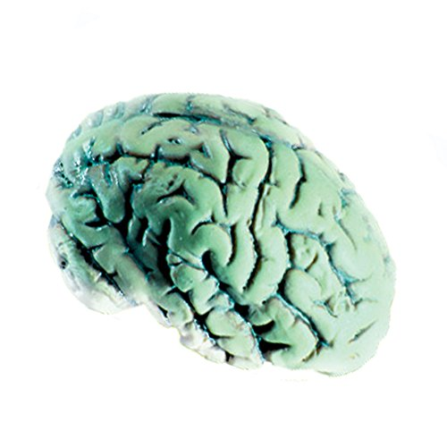Glow In The Dark Brain Soft Plastic Halloween Horror Mad Scientist Prop