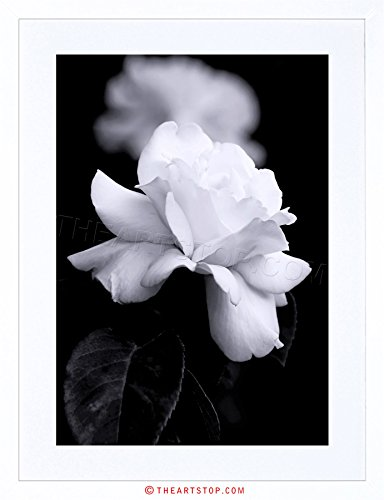 PHOTO NATURE BLACK WHITE ROSE PETAL FLOWER FRAMED PRINT F12X4204