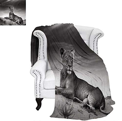 Print Artwork Image Wild Lioness on Desert Sand Dunes African Animal Safari Image Print Warm Microfiber All Season Blanket 60